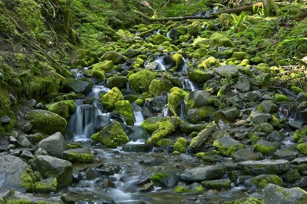Rocky rainforest creek