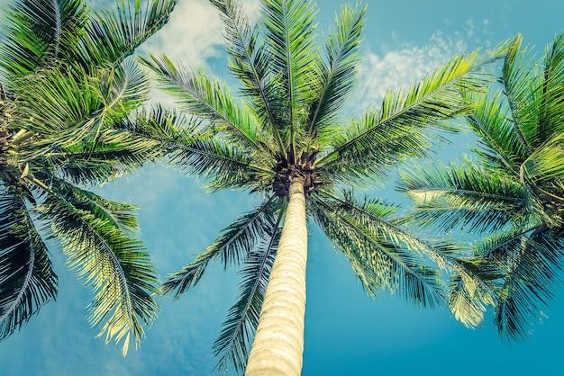 Rocznika piękny tropikalny drzewko palmowe - rocznika filtr