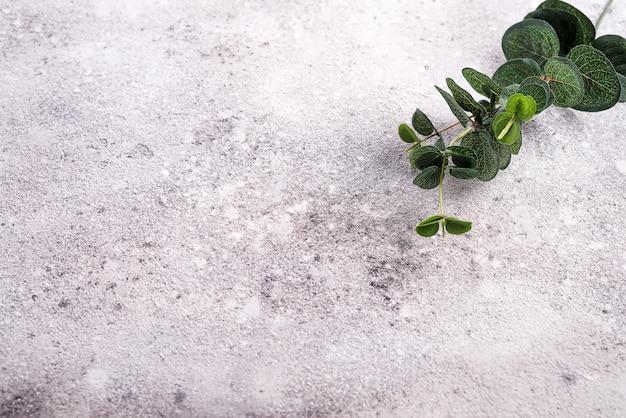Rocznika tło z eukaliptusowymi liśćmi nad szarym tłem.