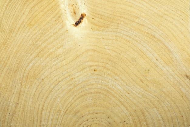 Roczny pierścień tamaryndowca do tekstury tła