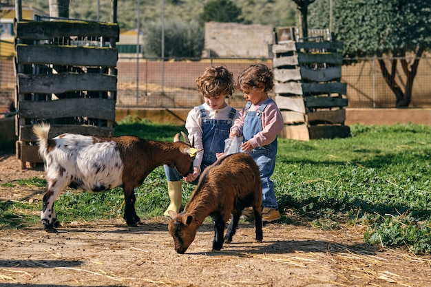 Rodzeństwo karmiące kozy na podwórku w letni dzień