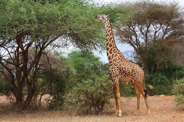Rodzina dziki ssak przyjaciele zwierząt żyrafa ptak