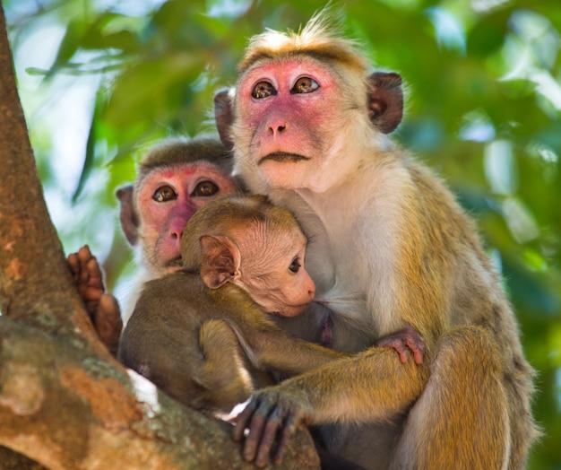 Rodzina małp siedzących na drzewie