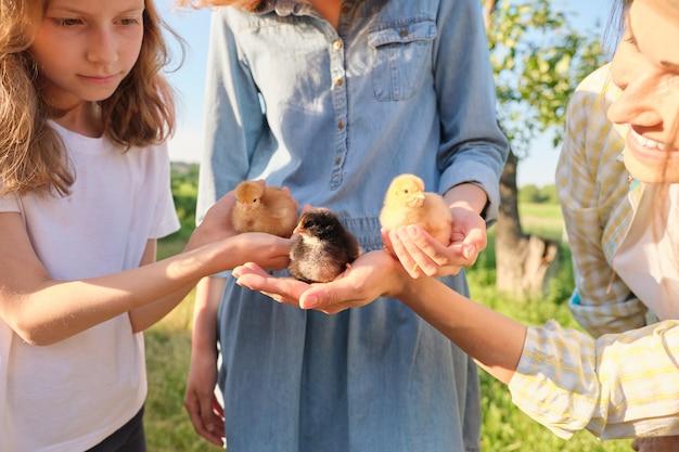 Rodzina, matka i dzieci dwie córki trzymające w rękach małe nowonarodzone kurczaki, tło wiosna natura, rolnictwo, przyjazny dla środowiska styl życia i żywność