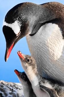 Rodzina pingwinów