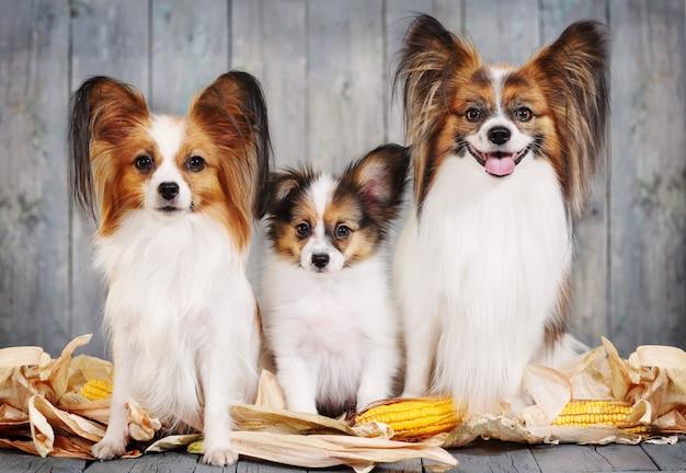 Rodzina psów, mama, tata i szczeniak.