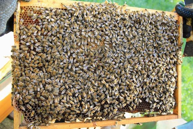 Rodzina pszczół siedzi na ramie o strukturze plastra miodu