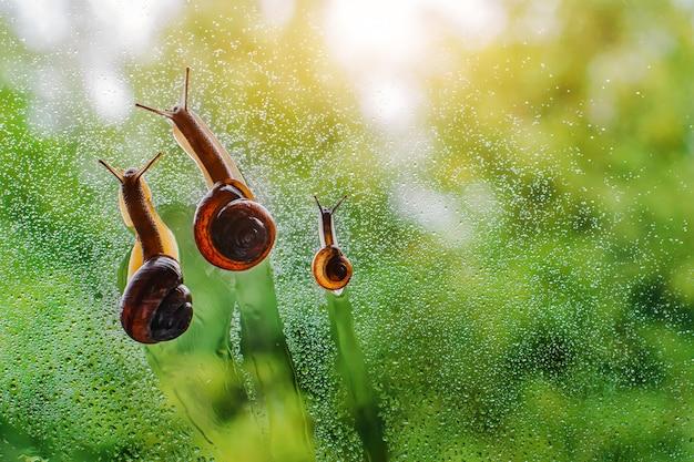 Rodzina ślimaków chodzenie w kolejce po wodzie
