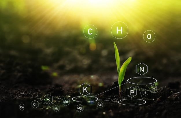 Rola składników pokarmowych w życiu roślin