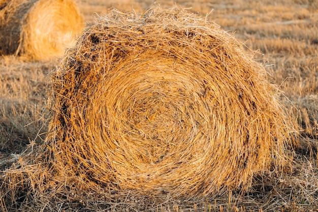Rolka siana na skoszonym polu w świetle zmierzchu lub świtu.