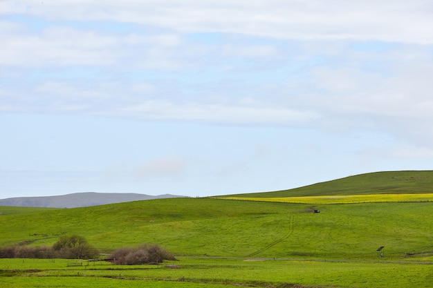 Rolling green hills północnej kalifornii