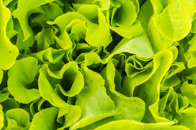 Rolnictwie świeżość organiczną świeże zielone
