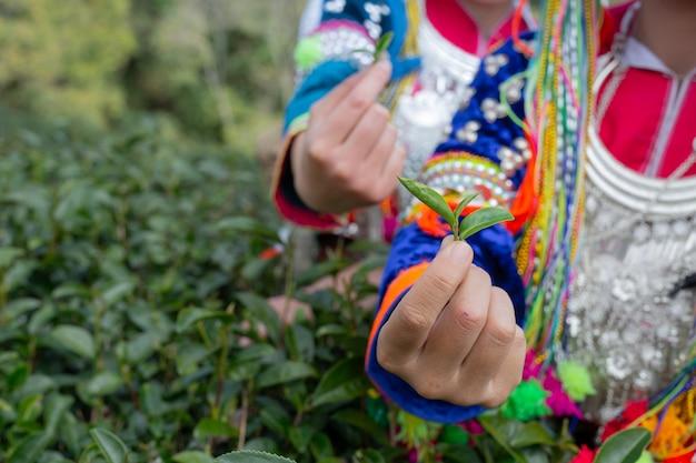 Rolnictwo kobiet górskich