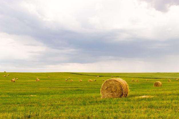 Rolnictwo uprawia ziemię tło z sianem na łące.
