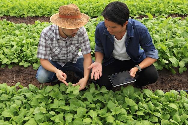 Rolnicy i ich doradcy monitorują wzrost drzew na działkach