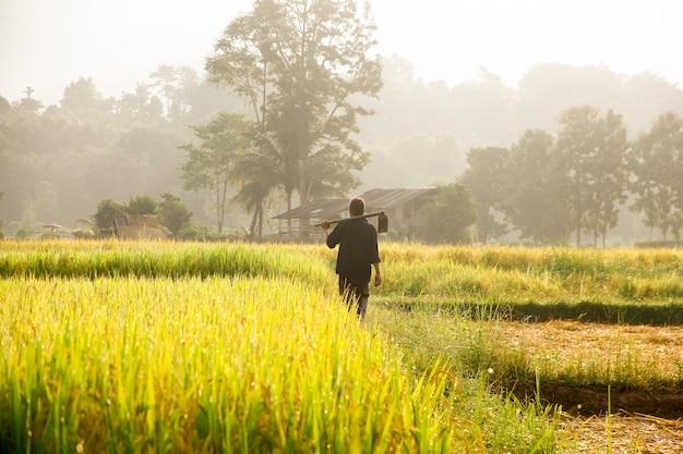 Rolnicy niosący pik na polu.