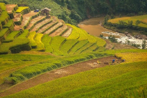 Rolnicy pracują na tarasach ryżowych.