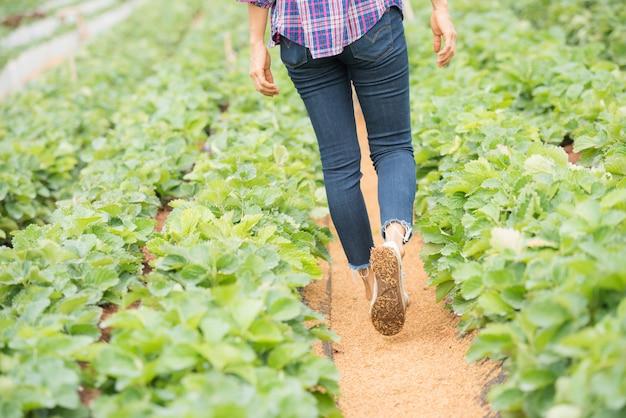 Rolnicy pracują w gospodarstwie truskawkowym