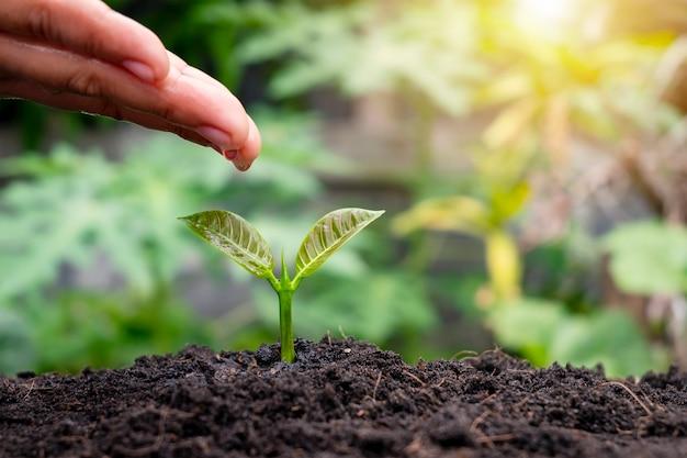 Rolnicy ręcznie podlewają małe rośliny zgodnie z koncepcją światowego dnia ochrony środowiska.