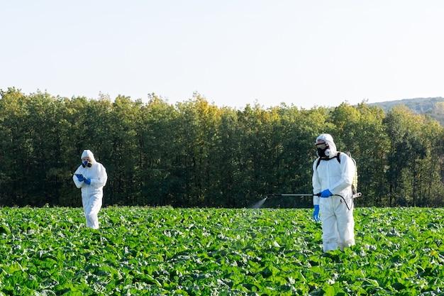 Rolnicy rozpylający pestycydy polowe zbierają chemię ochronną