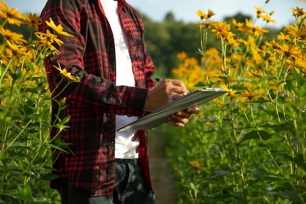 Rolnicy sprawdzają farmę słonecznych letnich kwiatów.