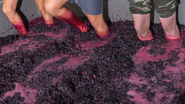 Rolnicy stąpający po winogronach proces dojrzewania wina