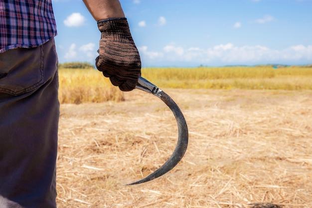 Rolnicy trzyma sierpa na polu.