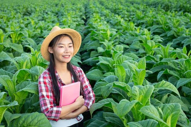 Rolnicy trzymają notatnik sprawdzają nowożytnych tabacznych pola.