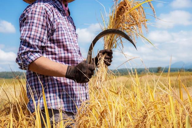 Rolnicy trzymają sierpy na polu.
