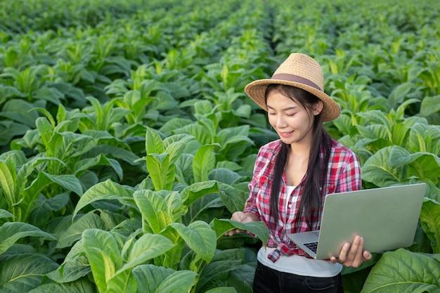 Rolnicy trzymają tabletki sprawdzają nowoczesne pola tytoniu.