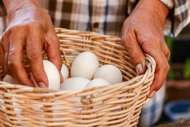 Rolnicy trzymają w koszu wiele kaczych jaj, które można spożywać jako żywność.
