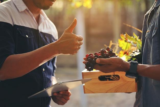 Rolnicy z winnic przynieśli klientom kiść winogron, a klient wyraził zadowolenie kciukami do góry.