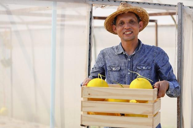 Rolnicy zbierają melony w szklarniach i niechemiczne środki owadobójcze. dostarczać klientom
