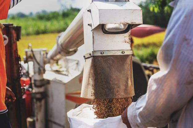 Rolnicy zbierają pola ryżowe. z kombajnem do ryżu