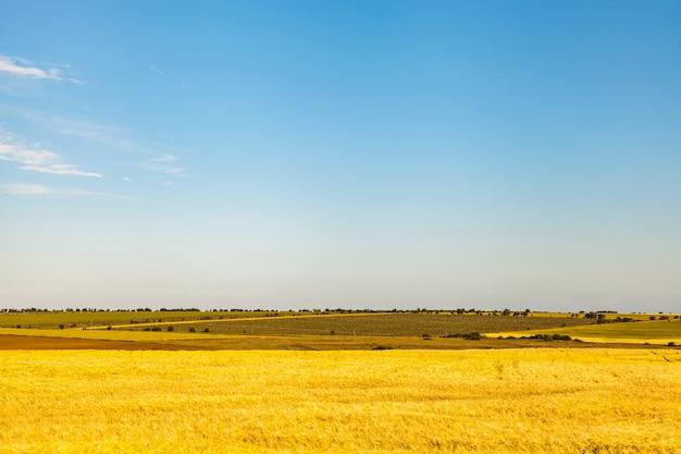 Rolnicze pola pszenicy i winnice w europie