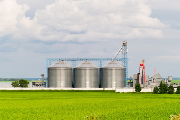 Rolnicze silosy, plantacje słonecznika na pierwszym planie - zewnętrzne budownictwo, składowanie i suszenie zbóż, pszenicy, kukurydzy, soi, słonecznika przeciw błękitne niebo z białymi chmurami