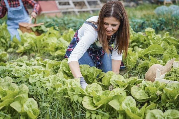 Rolniczki pracujące w szklarni podczas zbierania roślin sałaty - skup się na twarzy kobiety