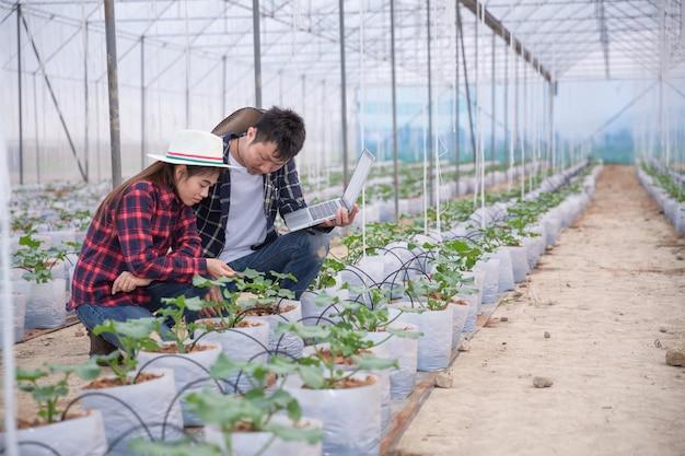 Rolniczy badacz z tabletką powoli sprawdza rośliny.