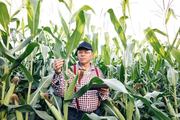 Rolnik agronom monitoruje widok z przodu zbioru kukurydzy na polu kukurydzy rolnik agronom w polu