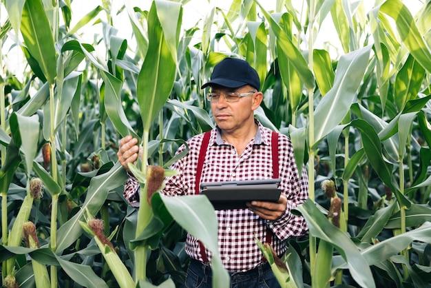 Rolnik agronom monitoruje widok z przodu zbioru kukurydzy na polu kukurydzy rolnik agronom