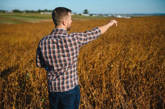 Rolnik agronom w polu soi sprawdzający uprawy przed zbiorami. produkcja i uprawa żywności ekologicznej.