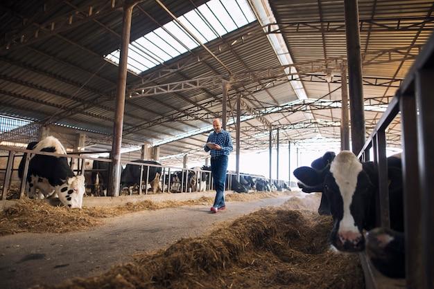 Rolnik chodzący po farmie zwierząt domowych z tabletem i obserwujący krowy