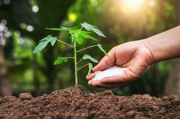 Rolnik daje użyźniaczemu młodemu drzewu w ogródzie
