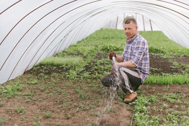 Rolnik dba o rośliny w szklarni
