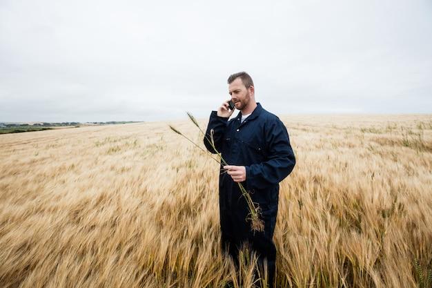 Rolnik egzamininuje uprawy podczas gdy opowiadający na telefonie komórkowym w polu