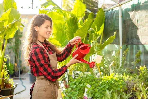 Rolnik kobieta podlewa rośliny w słonecznej szklarni