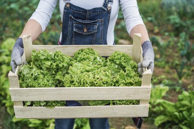 Rolnik kobieta trzymająca drewniane pudełko ze świeżą ekologiczną sałatą - główny nacisk na prawą rękę