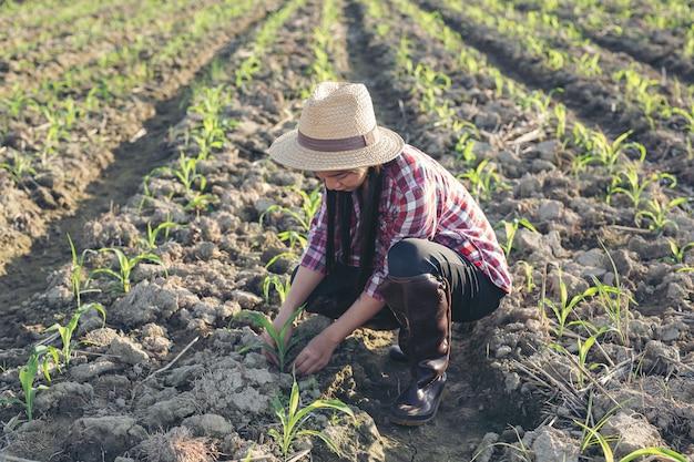 Rolnik kobieta wygląda kukurydzy w polu.
