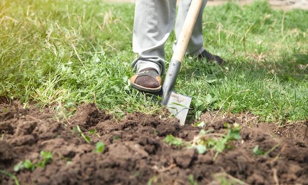 Rolnik kopie ziemię łopatą w ogrodzie.