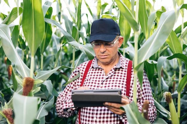 Rolnik korzystający z cyfrowego tabletu na polu kukurydzy o zachodzie słońca kukurydza w tle